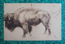 bison-etude-d-eleve-1.jpg